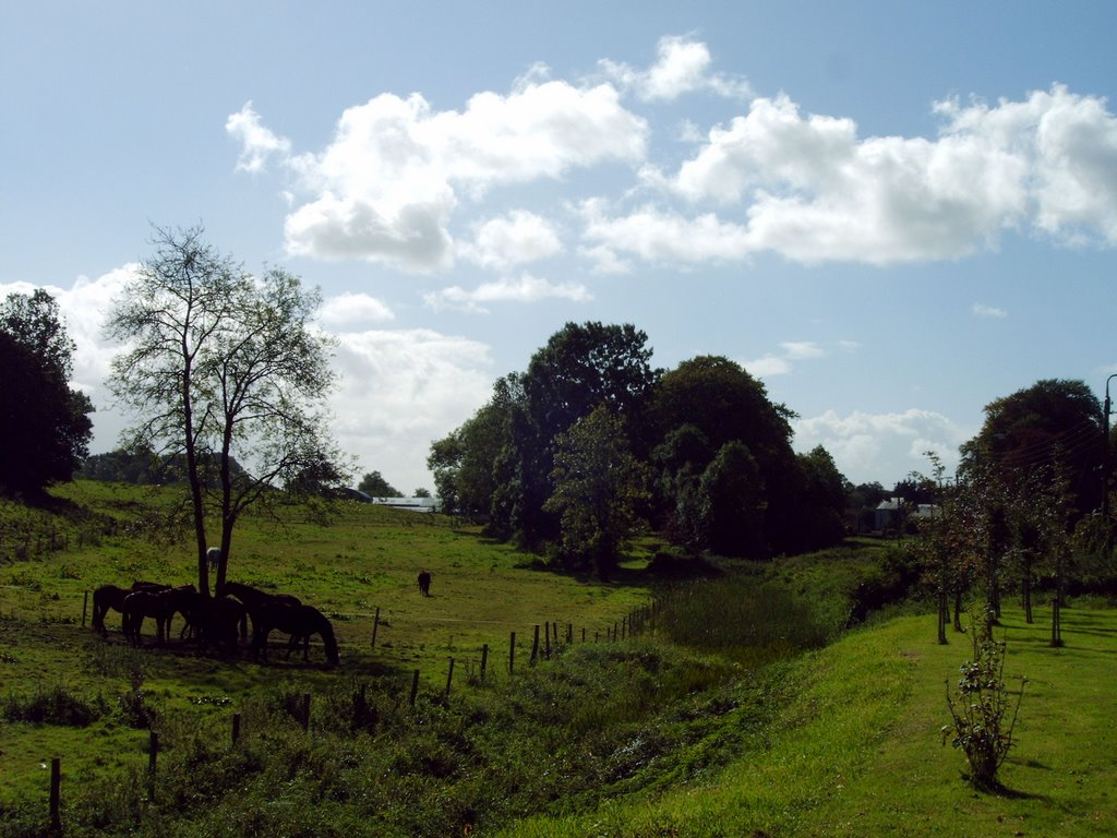 Ulster Canal, west of Clones, County Monaghan
